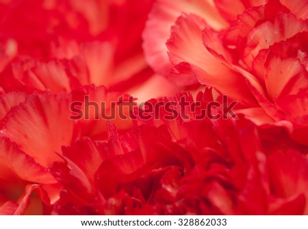 variegated red and orange carnation natural floral macro background - stock photo