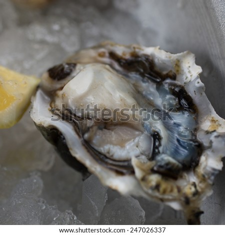 Varieties of freshly shucked oysters on ice - stock photo