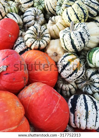 Variety of colorful squashes at the autumn market. - stock photo