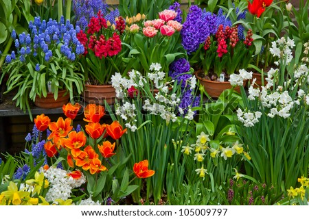variety of flowers in pots on display in shop - stock photo