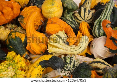 Variety of Gourds - stock photo