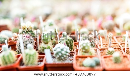 variety of small different cactuses in pots on market stall - stock photo