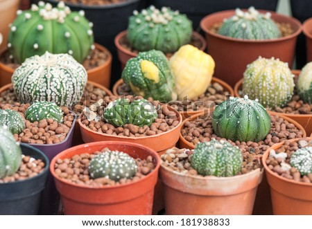 Variety of small potted cactus - stock photo
