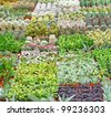 variety of succulents and catcus on sale from the florist inside a greenhouse - stock photo