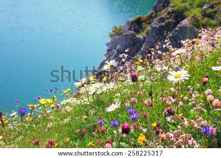 variety of wildflowers, coastal landscape with turquoise water - stock photo