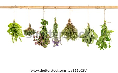 varios fresh herbs hanging isolated on white background. bundle of basil, sage, thyme, mint, marjoram, lavender - stock photo