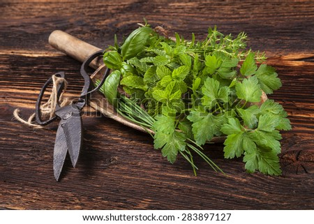 Various aromatic culinary herbs. Thyme, marjoram, basil, mint, chives and parsley on wooden spoon, with old scissors on old brown wooden background. Rustic, vintage, natural, country style images. - stock photo