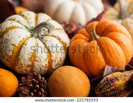 Various autumn pumpkins, pine cones, leaves and dried fruits.  - stock photo