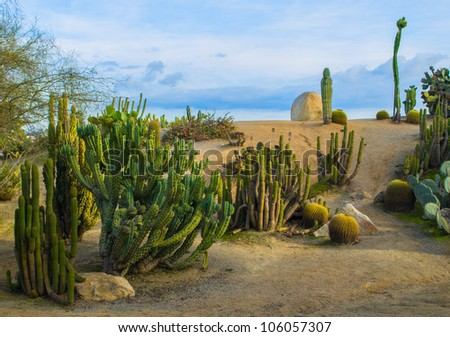 Various cactus against a blue sky in Southern California - stock photo