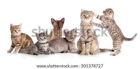 various cats group isolated - stock photo