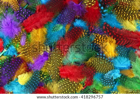 various  color feather background - stock photo