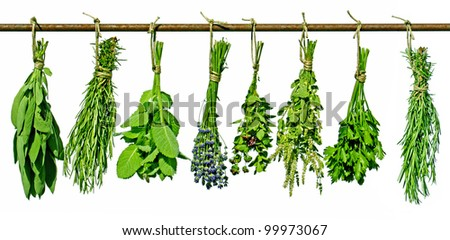 various fresh herbs hanging on a rod - stock photo