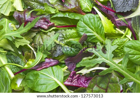 Various herbs background - stock photo