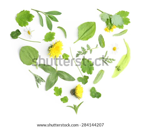 Various medicinal plants, isolated on white - stock photo