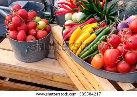 Various of vegetable in garden - stock photo