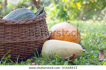 Various pumpkins lying on the ground in the garden - stock photo