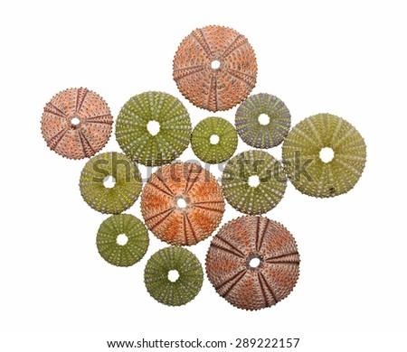 Various sea urchin shells isolated - stock photo