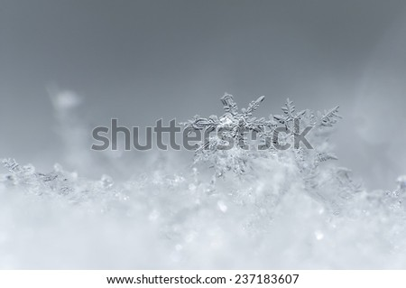 various snowflakes closeup - stock photo