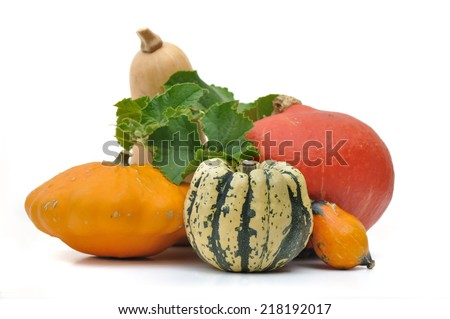 various  squashes with foliage on white background - stock photo