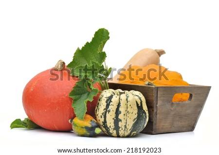 various squashes with foliage  on white background - stock photo
