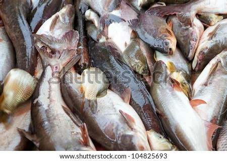 Various type of live fresh water fish at the market. - stock photo