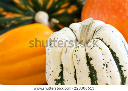 Various types of colorful squash. - stock photo