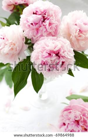 Vase of peony blooms - stock photo