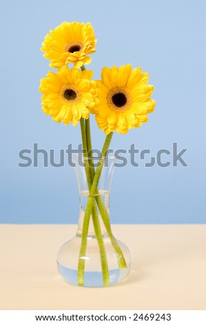 Vase of yellow daisies on table with tan cloth and blue background - stock photo