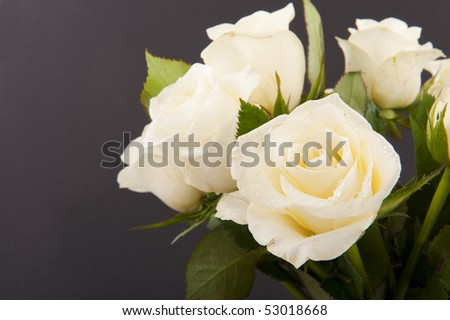 Vase white roses for a funeral isolated on black - stock photo
