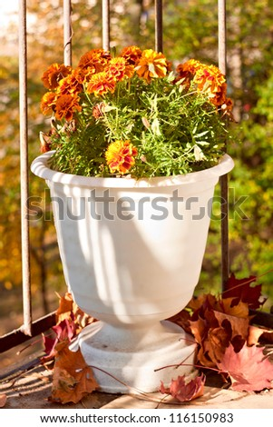 Vase with blooming marigolds on the balcony - stock photo