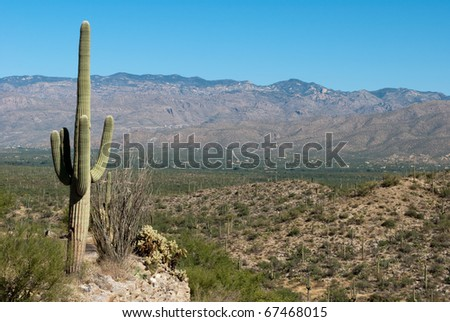Vast cacti filled desert landscape with deep blue sky and mountains in the distance. Saguaro National Park, Tucson Arizona, 2010. - stock photo