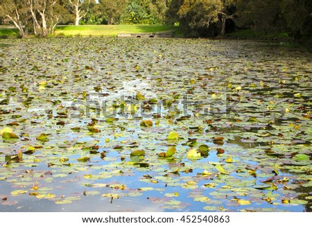 Vast Lily Pond in Nature (Garden Textures and Pond Textures) - stock photo