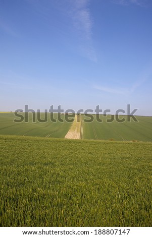 vast wheat fields in rural yorkshire england with a disused farm in rolling hills under a blue sky in late springtime - stock photo