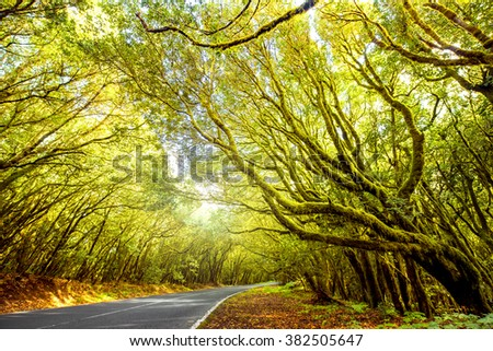 Vechicle road in the forest in Garajonay national park on La Gomera island in Spain - stock photo