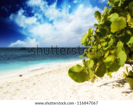 Vegegation of a beautiful caribbean beach with Ocean - stock photo
