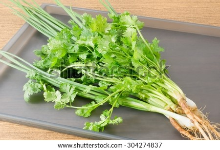 Vegetable and Herb, Bunch of Fresh Parsley, Chinese Parsley or Coriander and Spring Onion for Seasoning in Cooking on Tray. - stock photo
