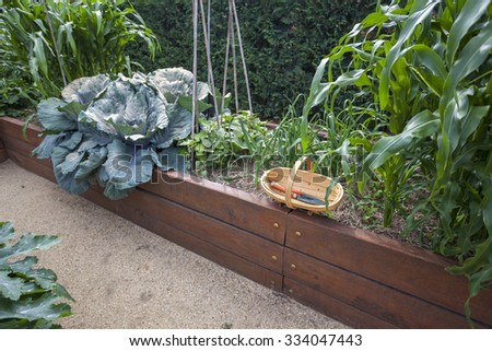 Vegetable garden bed with trug - stock photo