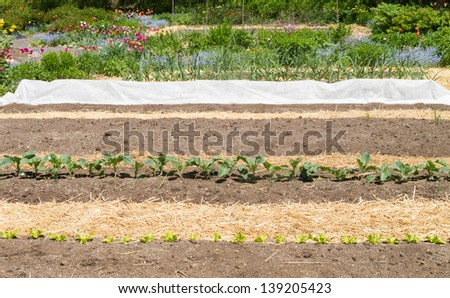 Vegetable garden in early spring with straw mulch - stock photo