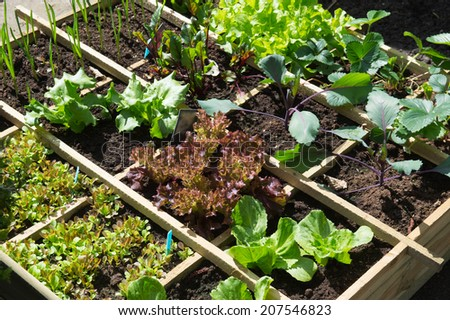 Vegetable garden with assortiment vegetables and cold container - stock photo