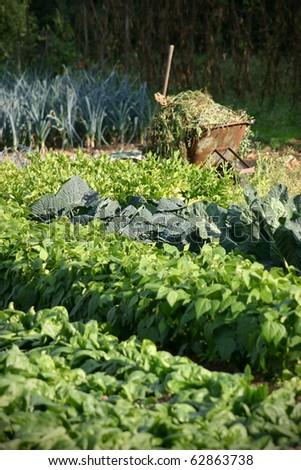 vegetable garden with cart full of weeds in Maastricht (Netherlands) - stock photo