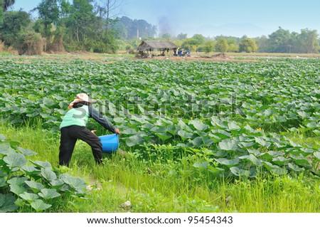 Vegetable gardeners are watering - stock photo
