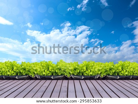vegetable in farm sky background. - stock photo