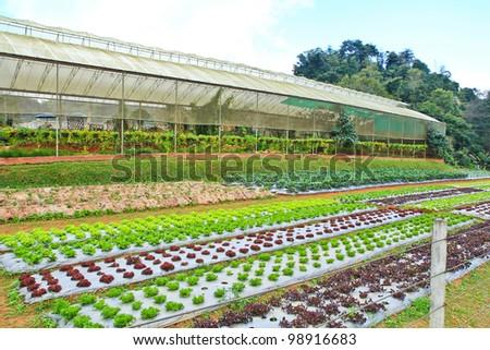 Vegetable plots - stock photo