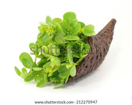 vegetable portulak - stock photo