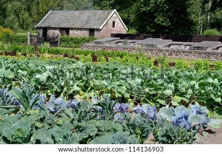 Vegetables and flowers at Castle Hackfort�s garden in Vorden, The Netherlands. - stock photo