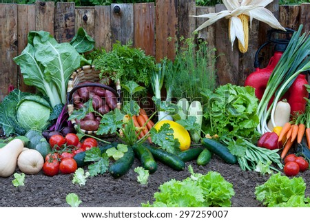 vegetables and greens in the garden - stock photo