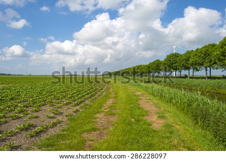 Vegetables growing on a field in spring - stock photo