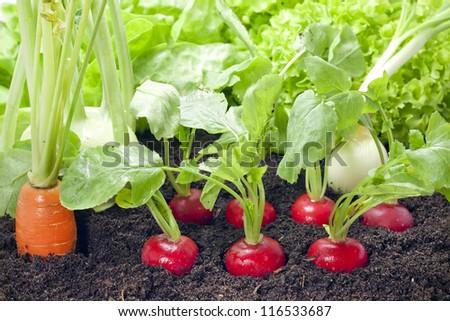 Vegetables mixed assortment growing in the garden - stock photo