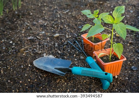 Vegetables ready to be plant in garden photographed with garden tools - stock photo