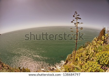 Vegetation in the Cinque Terre Park, Corniglia. - stock photo